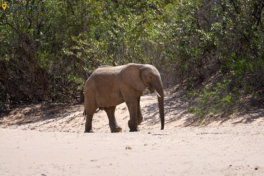5-day Namibian