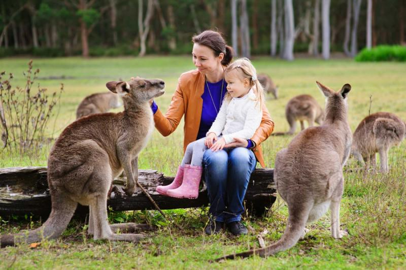 Australia Travel Review: Luxury Australia Vacation - Activities, snorkeling, koalas, kangaroos..