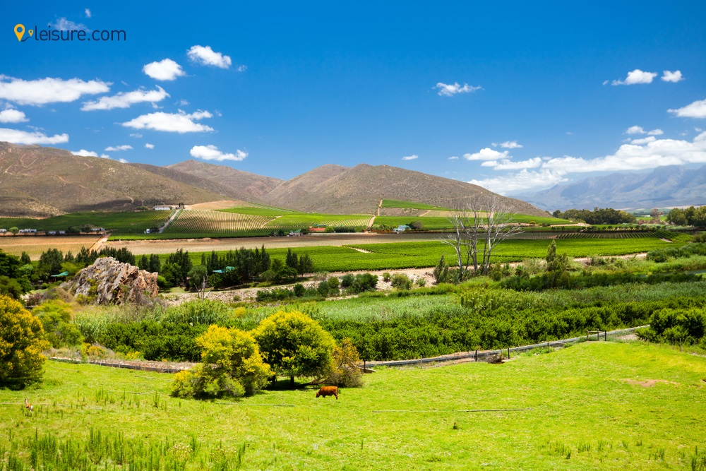South Africa Safari for a Family Vacation