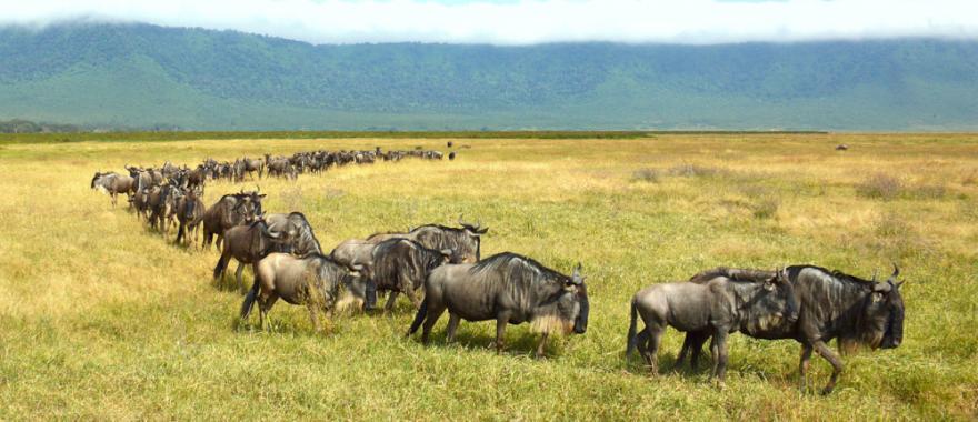 Travel Review: Luxury Africa Family Safari, Namibia, Kenya, Maasai Culture..