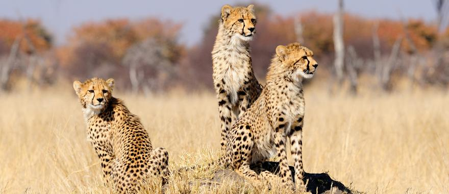 Travel Review: Perfect Tour To Zimbabwe, Africa Safari, Botswana, South Africa..
