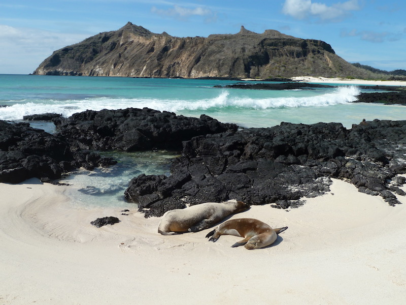 Walk Through the Volcanoes and World Heritage City: A 5-day Tour to Galapagos & Ecuador