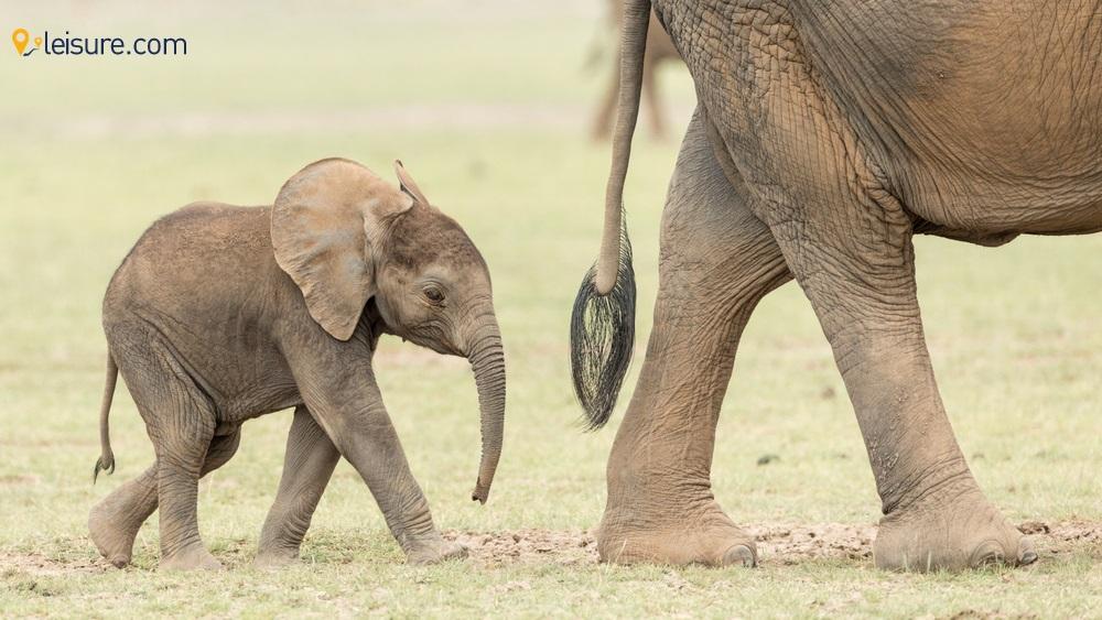 Go Ecogreen with the Nature-inspiring Kenya Lodges on a Responsible Kenya Safari