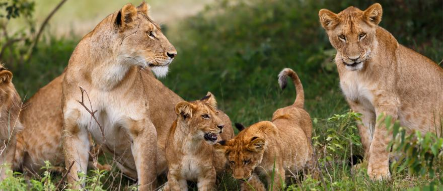 Excellent Botswana Safari Camps Experience With This Travel Company