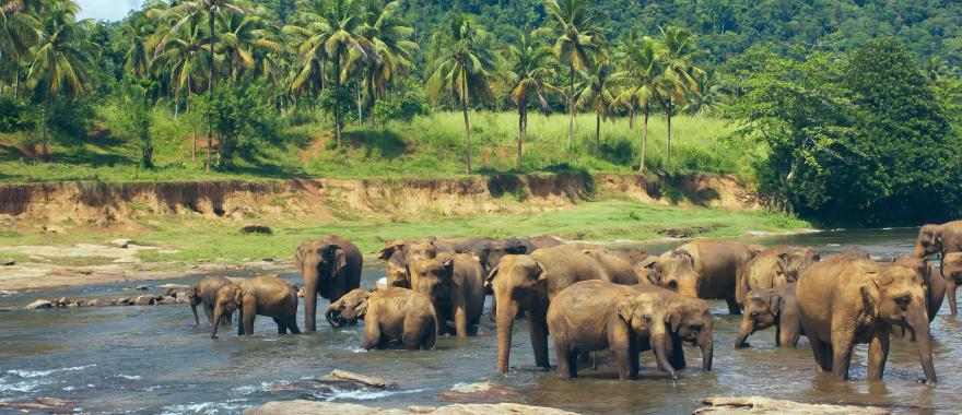 Dive Deep into Sri Lankan Beauty with 7-Day Customized Sri Lanka Itinerary