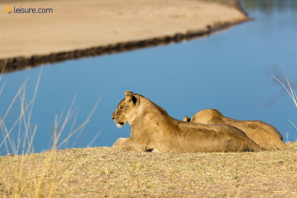 bia Safari Itinerary d