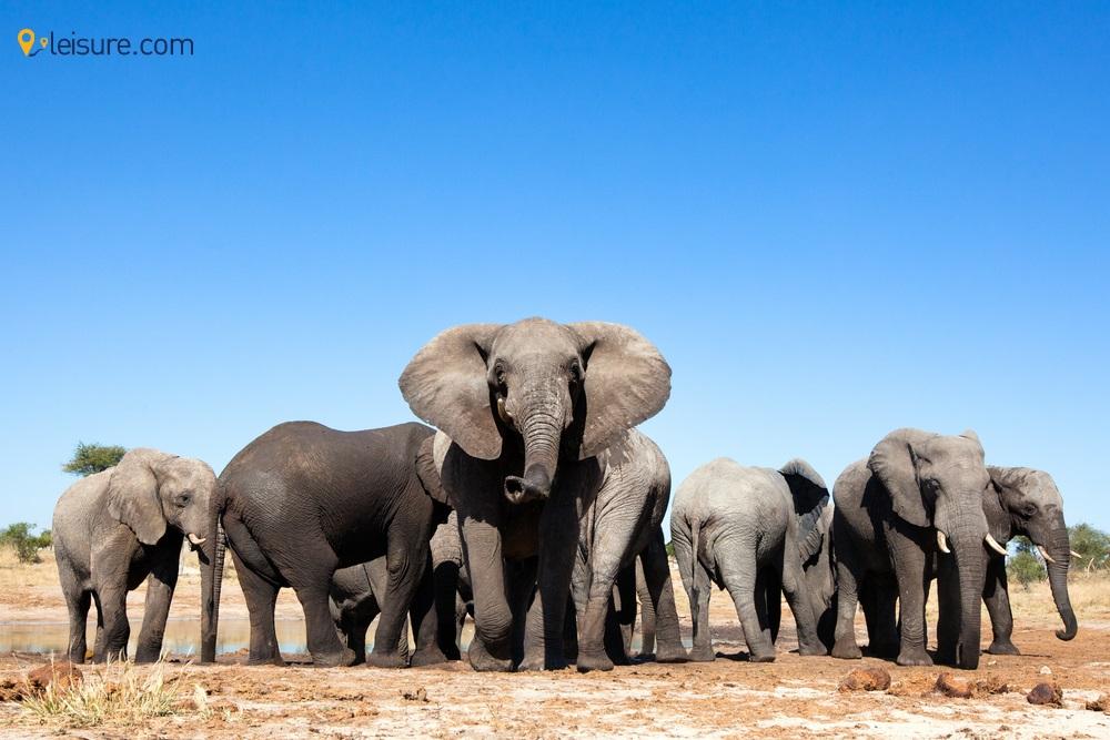 Zambia Safari Itinerary