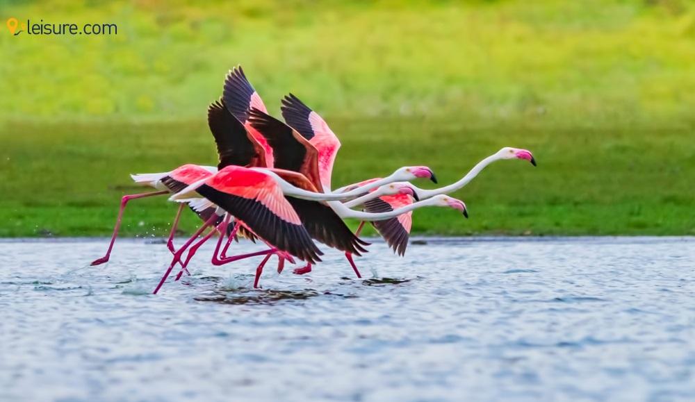 Explore the Kenyan Rush with this amazing 7-Day Kenya Safari