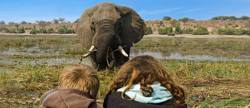 Botswana & Zimbabwe Safari - A Perfect Family Adventure With Guided Tour