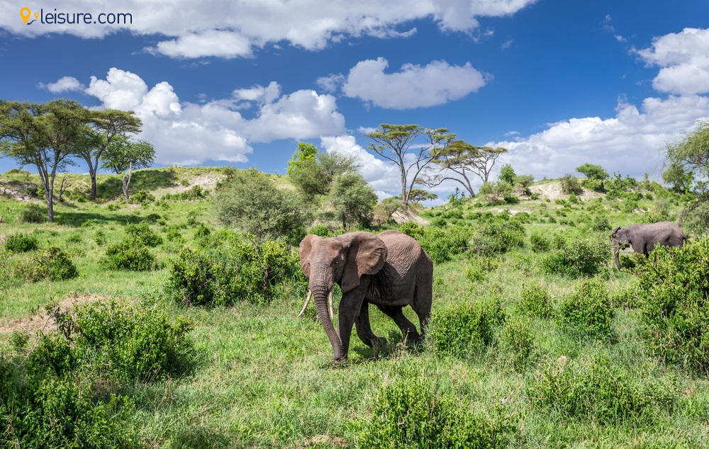 Define Your Love in this 7-Days Honeymoon Tanzania Safari