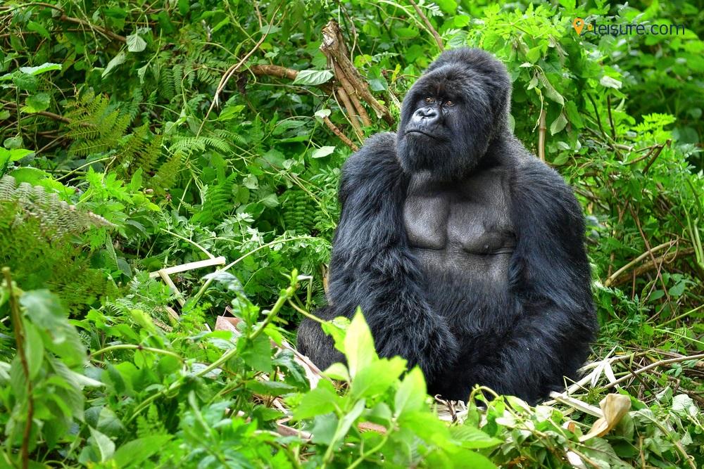 Get Intimate with the Wild in this Exquisite Uganda Safari