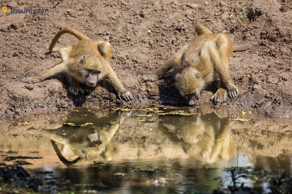 Amazing and Cheap Zambia Safari d