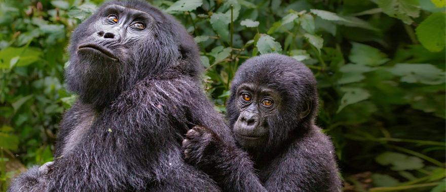 Book yourself for exclusive Photography Safari Gorilla Trekking