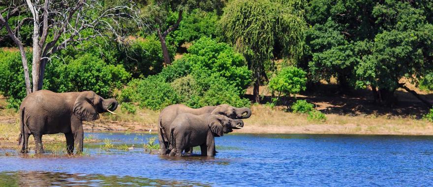 A Mesmerising Experience In Botswana  Safari