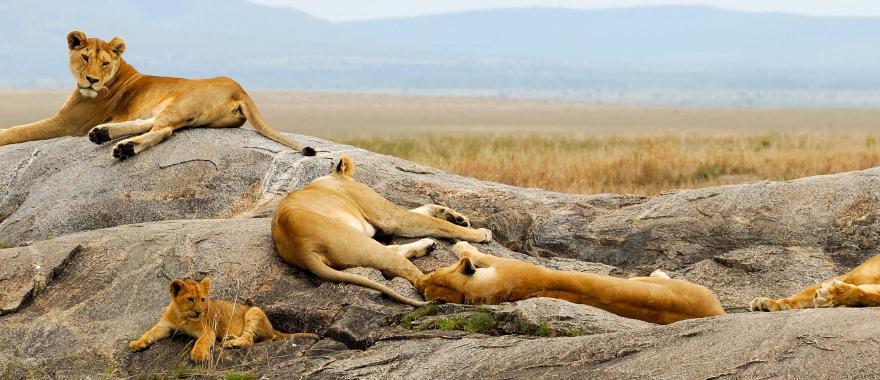 Excellent Rwanda Safari