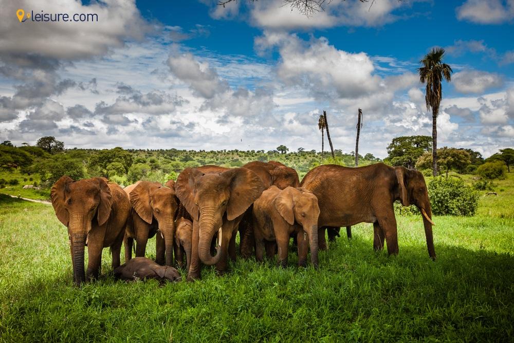 Explore the North Circuit with this 7-days Tanzania Safari Vacation Itinerary