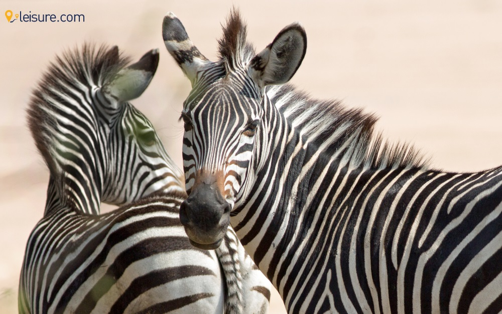 Enjoy The Thrills on This Handcrafted 10-Days Zambia Safari Itinerary