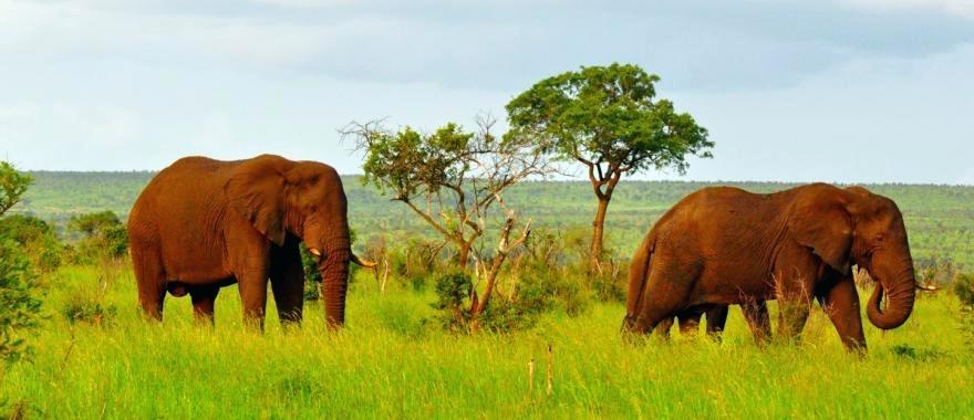 A Memorable South Africa Safari