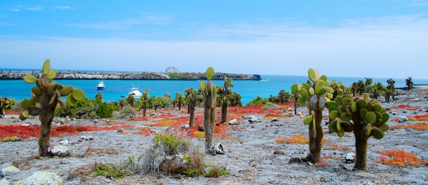 A Guide To Best Latin American Adventure Vacation in Galapagos