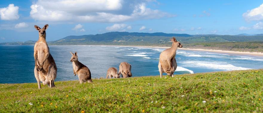 Explore The Great Ocean Road With One Of The Best Australia Tour Packages