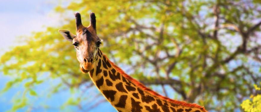 Kenya Safari Review