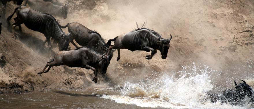 Rwanda Safari Review