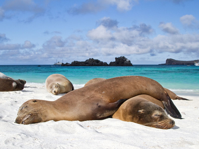 A Unique Experience in Ecuador and Galapagos Tour