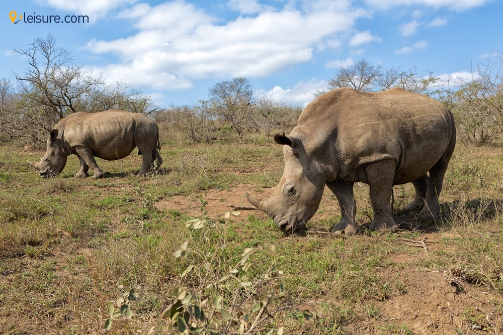 South Africa Safari Vacations