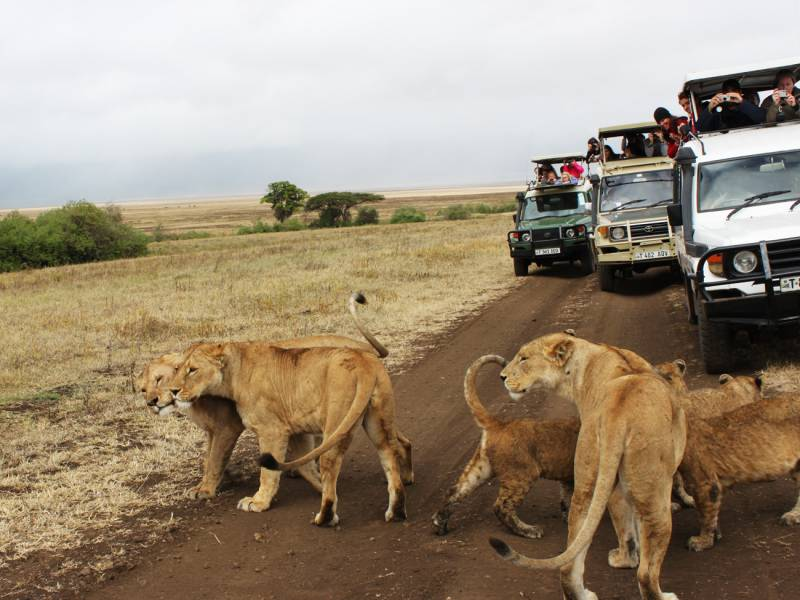 A Memorable South Africa Safari Tour