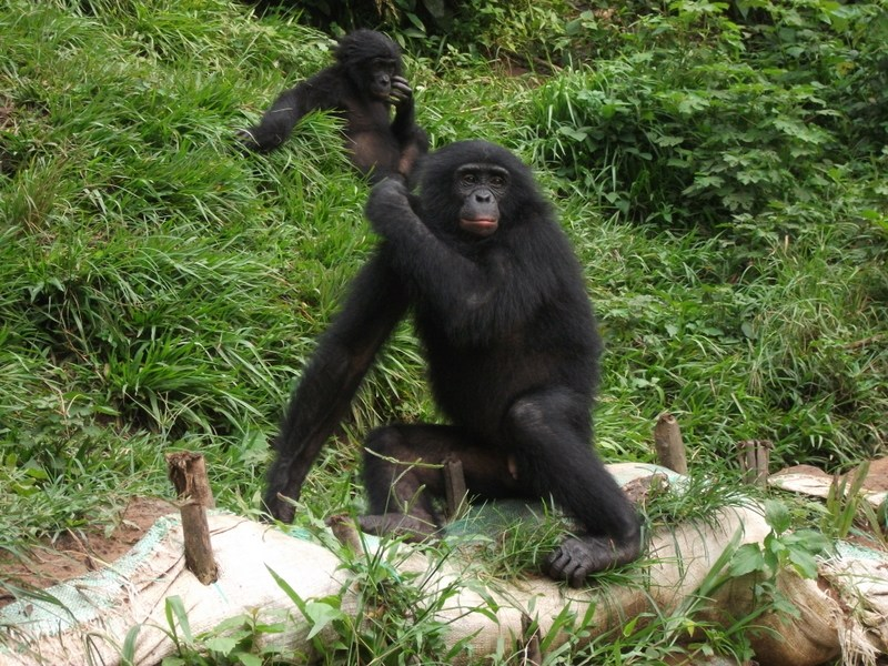A Chilling Wildlife Experience at Uganda