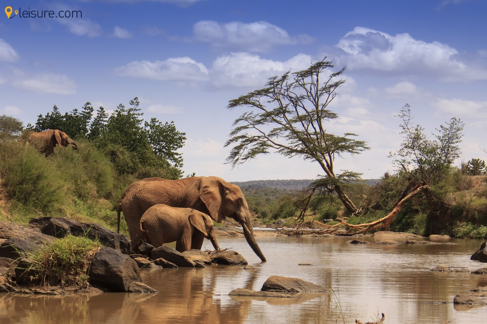 Kenya Safari Tours 2020: The Best Places to Explore in 7 Days