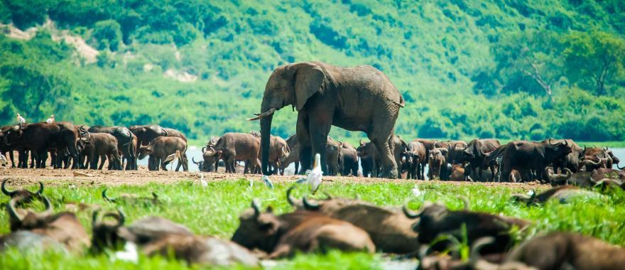 Incredible Kenya Safari Tour