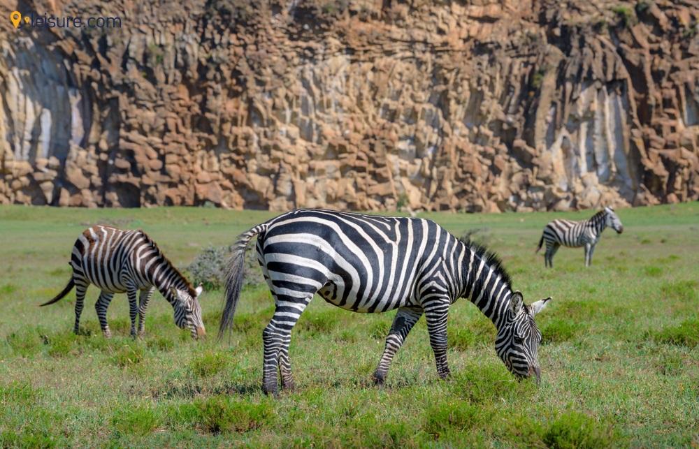 8 Days Itinerary to Plan a Budget-friendly Safari in Kenya