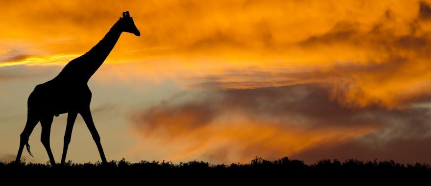 Travel Review: A Wonderful yet Budget Friendly Kenya Safari