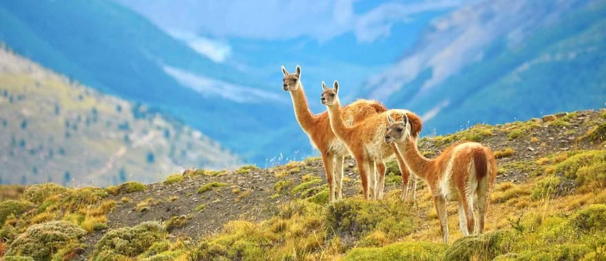 Explore Chile From North To South In Latin America Adventure Travel
