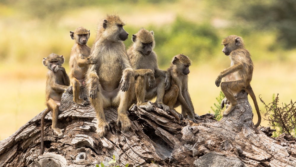 South Africa Safari Vacations
