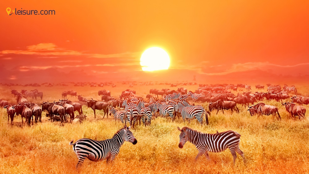 8-Day Tanzania Safari Itinerary So You Do Not Miss the Top Attractions