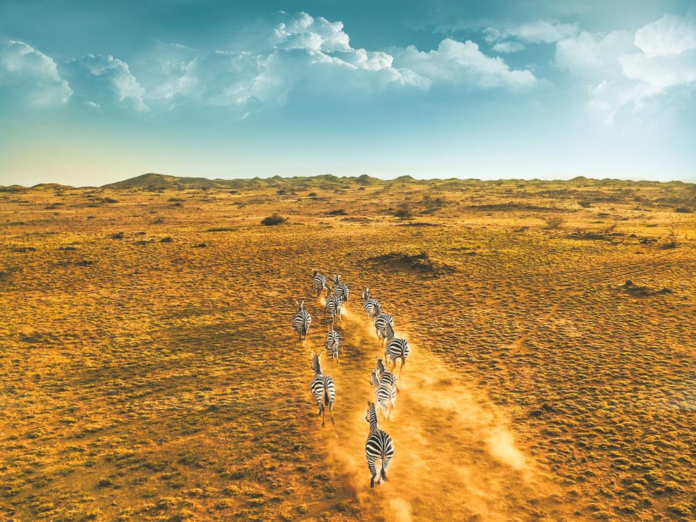 8-Day Tanzania Safari Itinerary