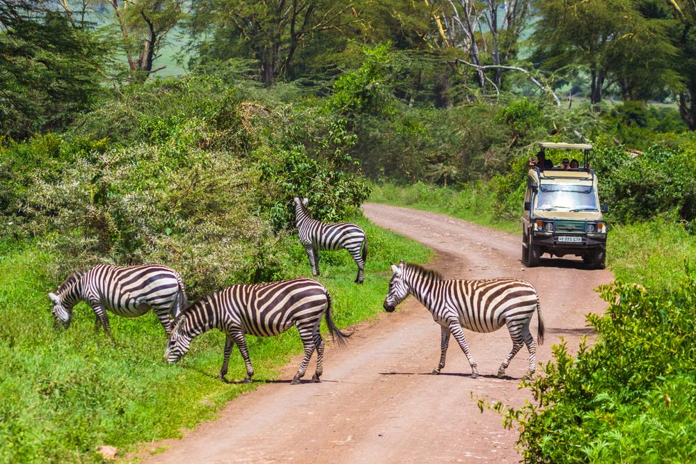 8-Day Tanzania Safari