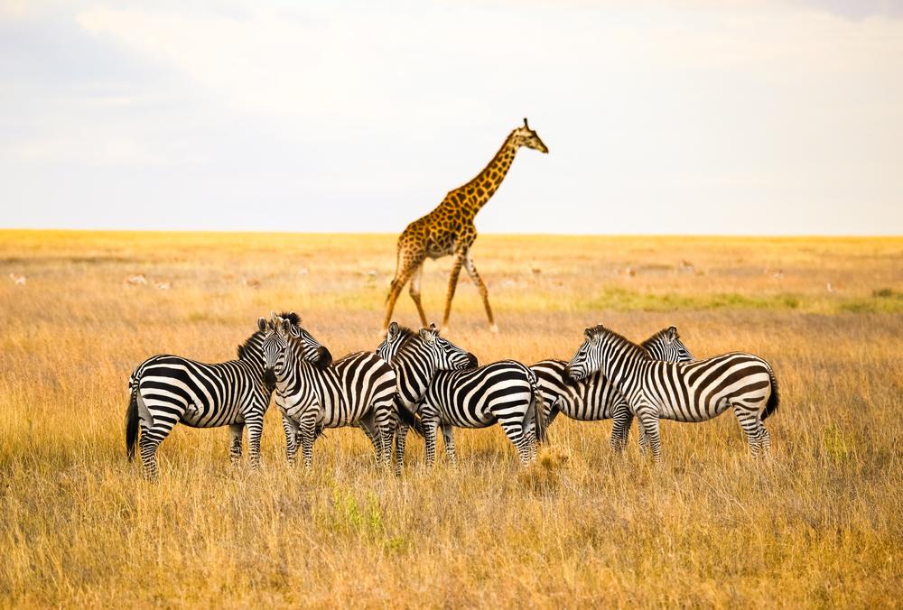 8-Day Tanzania