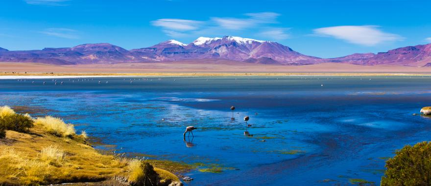 Explore The Best of Chile In 8-Day Latin America Adventure Travel