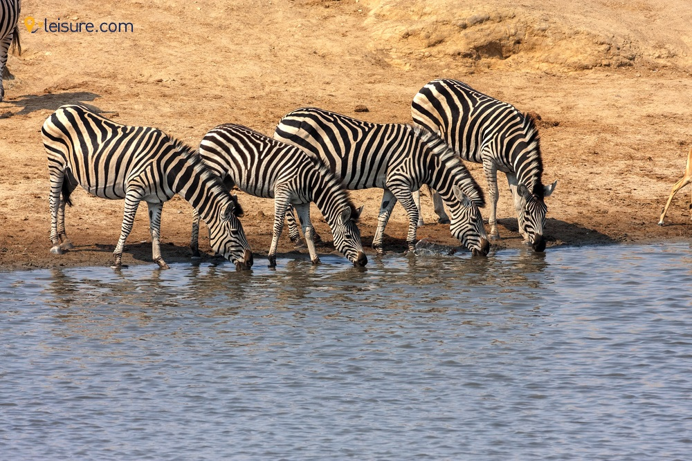 Zimbabwe safari: Victoria Falls, Hwange National Park & Mana Pools National Park