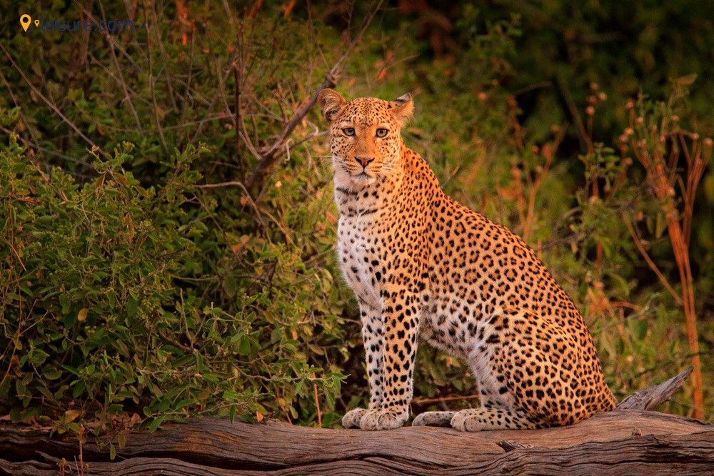 National Park & Mana Pools National Park