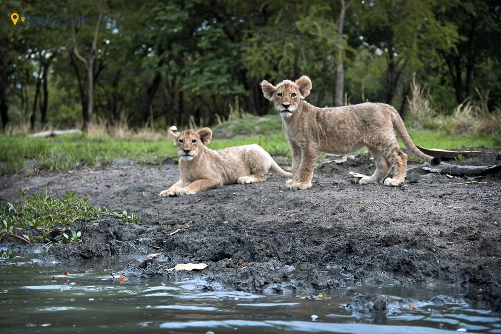 9-day Zambia Safari Tour: Water Hippos, Scenic Views, Afternoon Game Drives