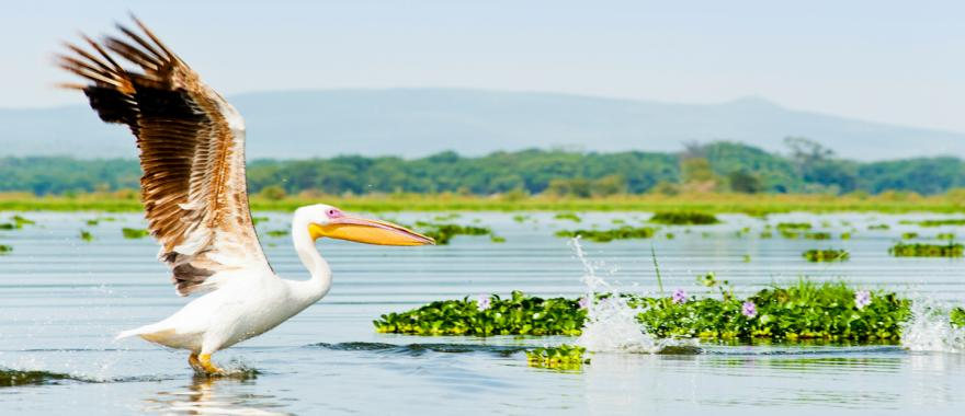 Exhilarating Safari Moments in Kenya