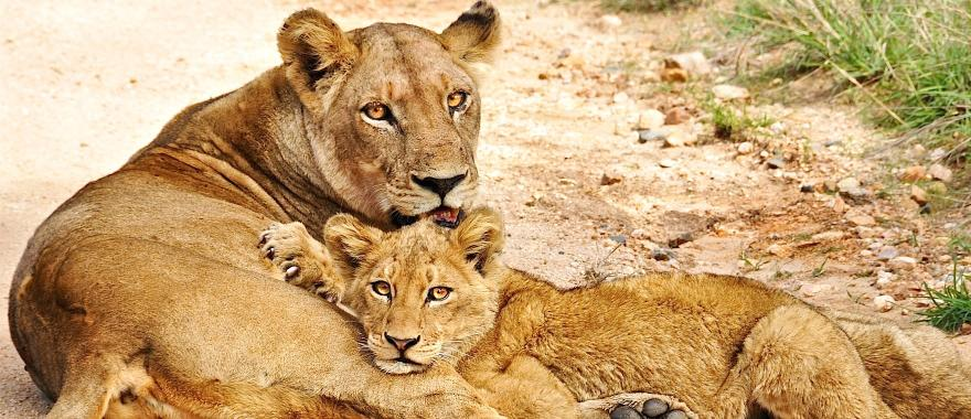 Awesome South Africa Trip for Families