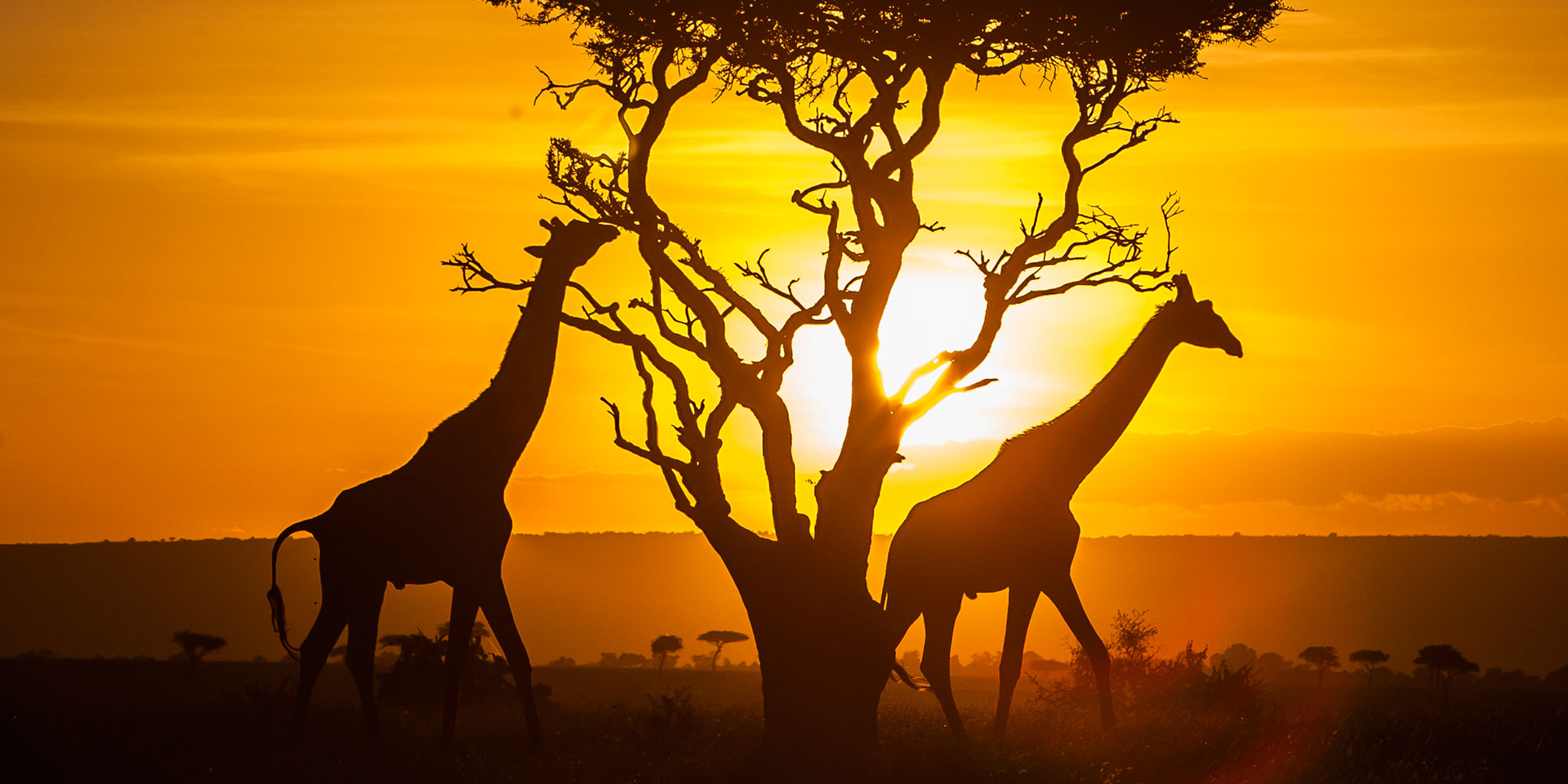 Travel Review: Best Kenya Tour