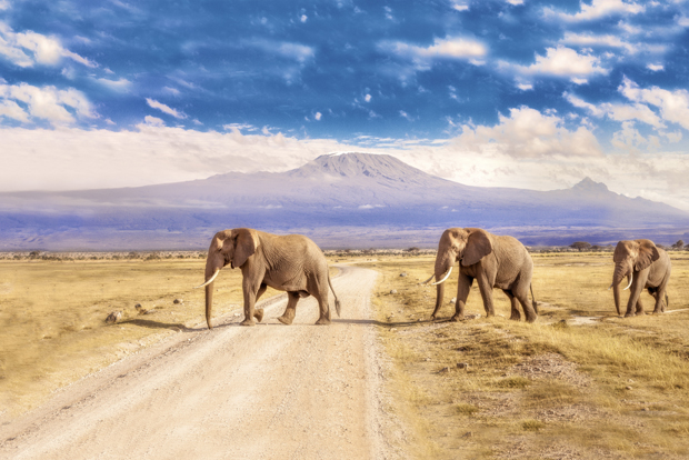Travel Review: Best One Week Tour To South African Safari