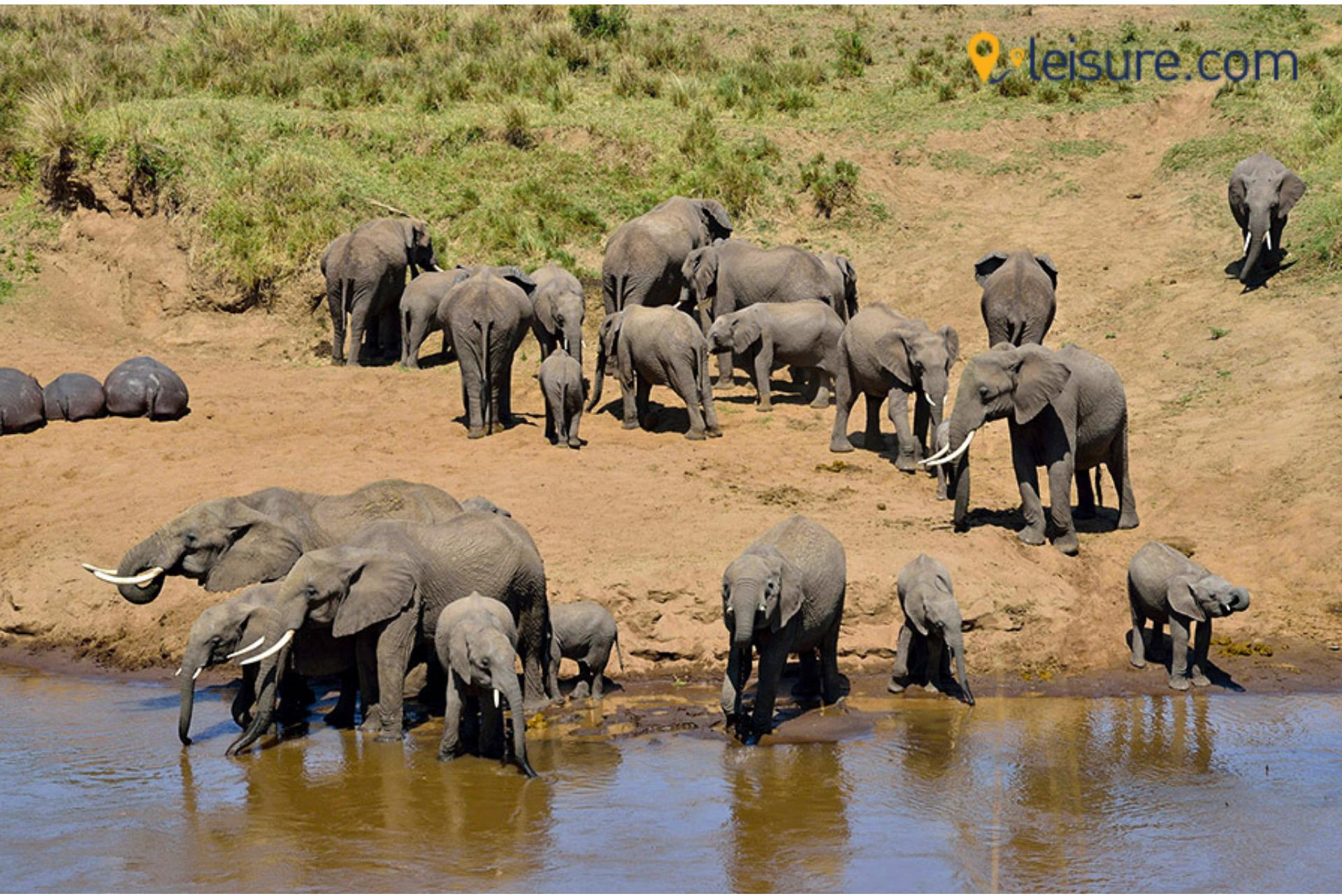 Botswana elephant image