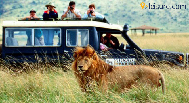 Astonishing Experience We Had During South African Safari Tour